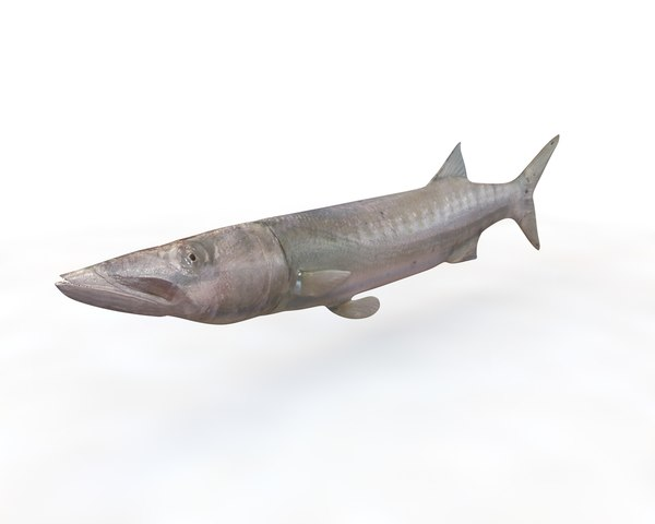 fish barracuda 3D model