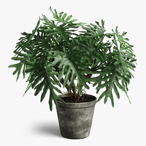 3D model philodendron plant