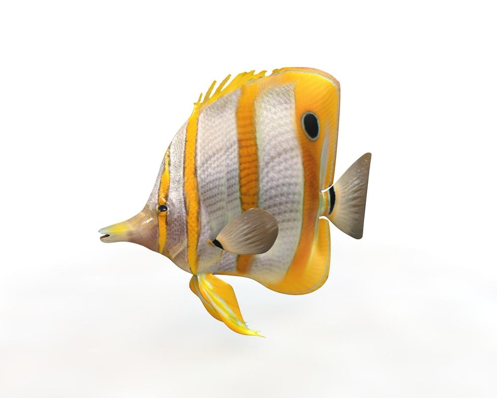 3D fish