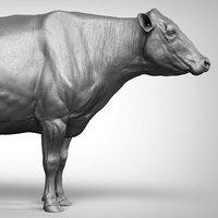 cow ztl zbrush 3D model