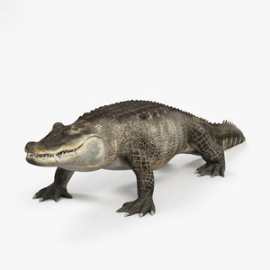 3D alligator reptile animal