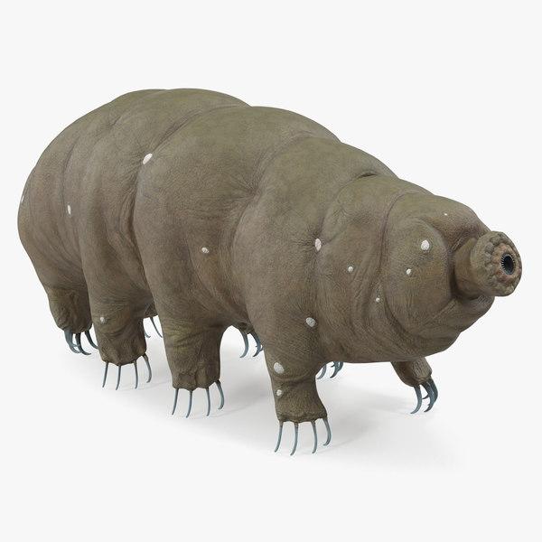 tardigrade rigged 3D