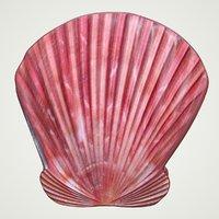 sea shell scallop pecten 3D model