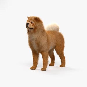 dog animal nature model
