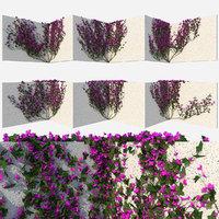 set flowers 3D model