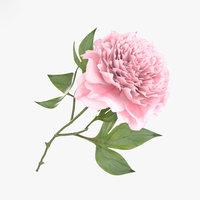 peony flowers plant 3D