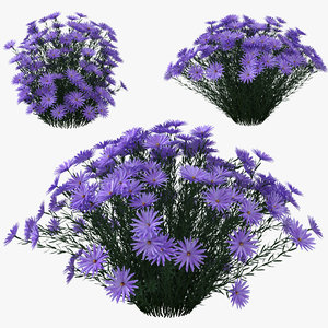 aster dumosus lady blue model