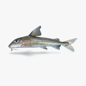 mouse catfish 3D model