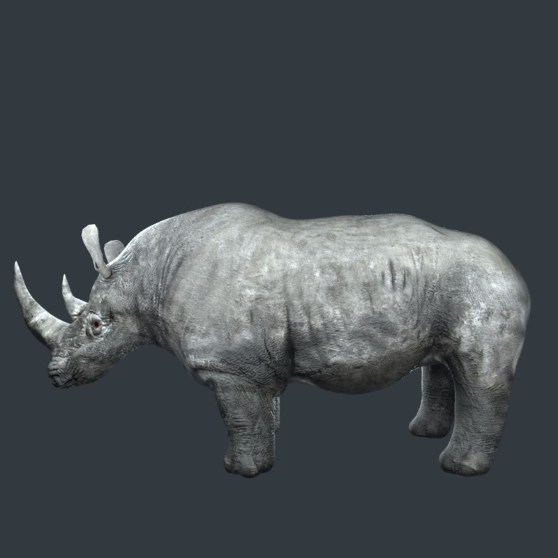 rhino rhinoceros animal 3D model