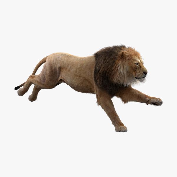 3D realistic lion animators