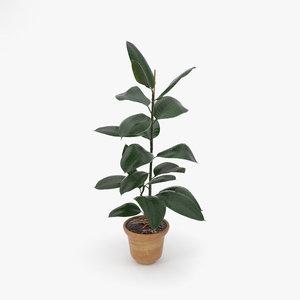 ficus plant nature model