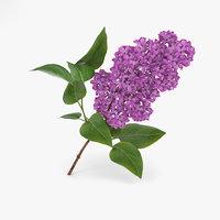 3D model lilac flowers plant