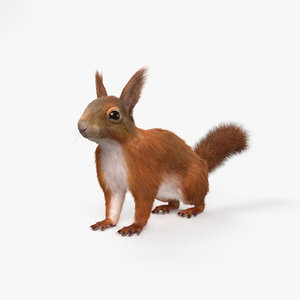 red squir squirrel model
