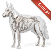 3D dog german shepherd model