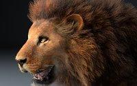 3D lion africa