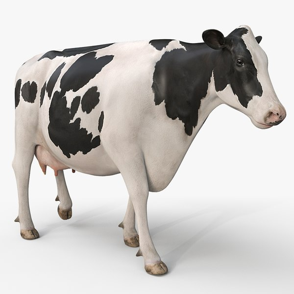 cow holstein pro animations 3D model