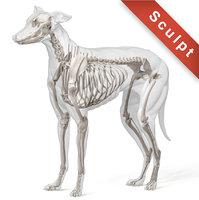 dog greyhound 3D model