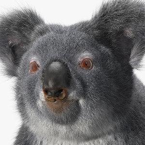 koala hair model