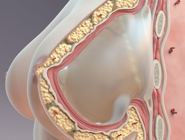 3D breast cross section model