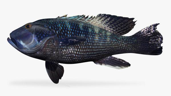 3D black sea bass
