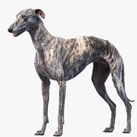 3D realistic greyhound
