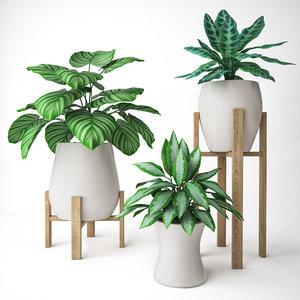 set plants model