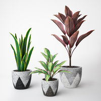set plants 3D model