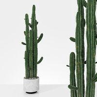 Plant 6 2