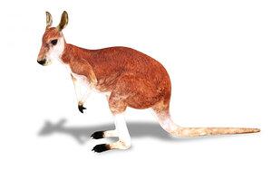3D rigged kangaroo animations