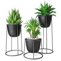 set agave yucca model