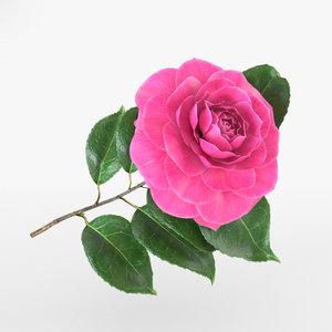 3D camellia flowers plant
