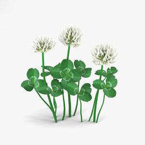 clover flowers plant 3D