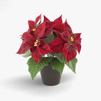 3D model poinsettia plant nature