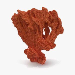 3D sponge pbr model