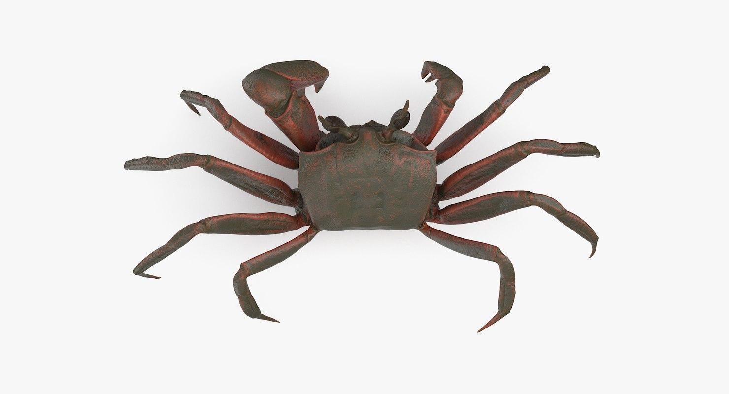 ghost crab 3D