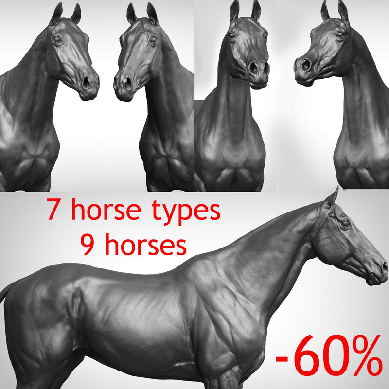 3D Horse Collection Vfx Full Cinematic Realistic Zbrush Sculpt