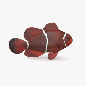 maroon clownfish model