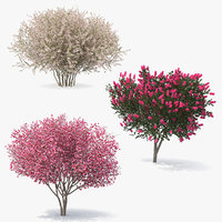 3D flowering bushes trees