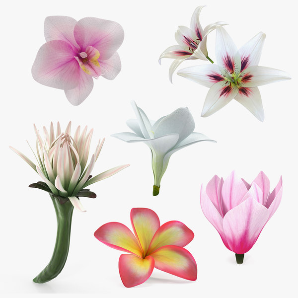 3D flowers orchid lily model