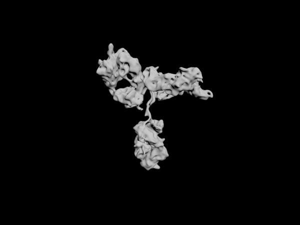 antibody 3D