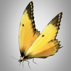 butterfly monarch insect nature 3D model