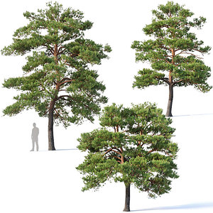 3D blossom pines
