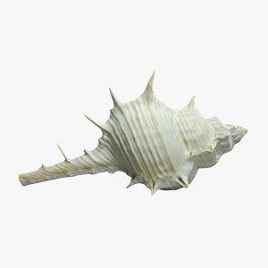 3D murex shell model