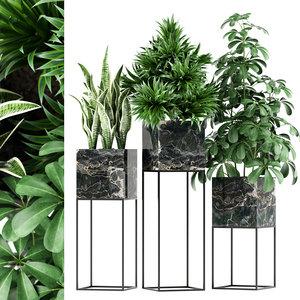 plants 144 maia 3D model