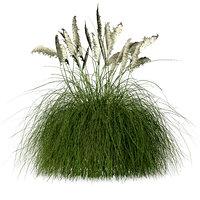 pampas grass 3D