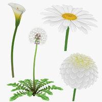 flower daisy dahlia 3D