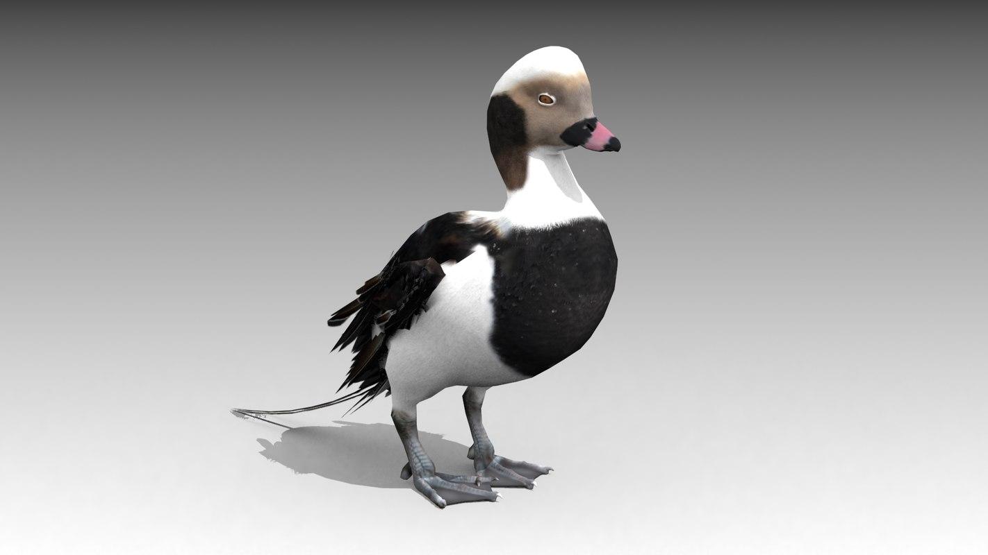 3D long-tailed duck model