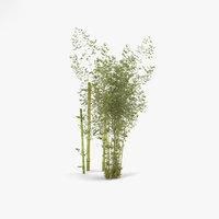 3D bamboo bambusoideae plant