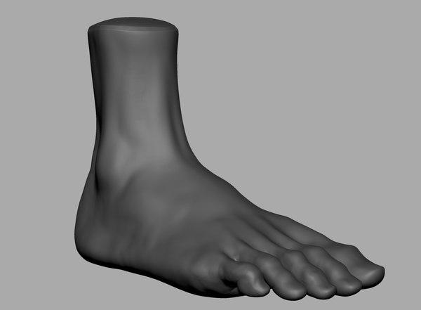 3D foot anatomy