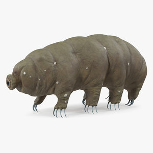 tardigrade microscopic water 3D model